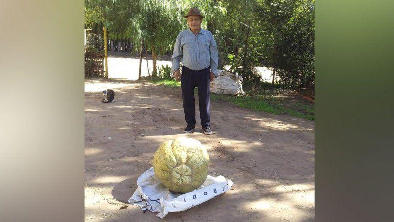 La historia del hombre que cosechó un zapallo de 42 kilos