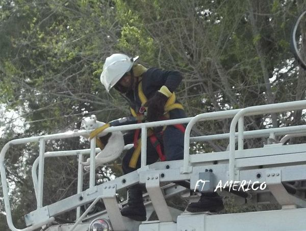 Gato en apuros fue salvado por bomberos en Oro