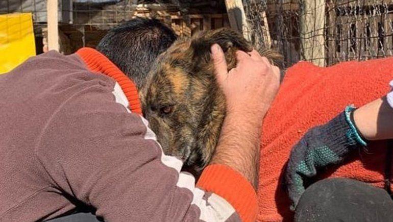 Caballito, Tigre y la historia de dos amigos inseparables que hallaron un hogar juntos