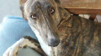 isla jordan: una nueva adopcion en la perrera emociono a todos