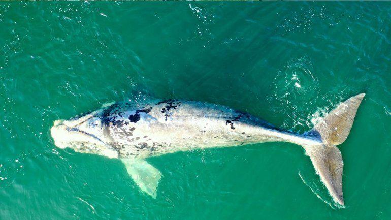 El viernes comienza la temporada de avistamiento embarcado de fauna marina