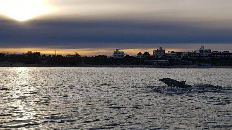 Las Grutas: buzos fueron sorprendidos por 30 delfines