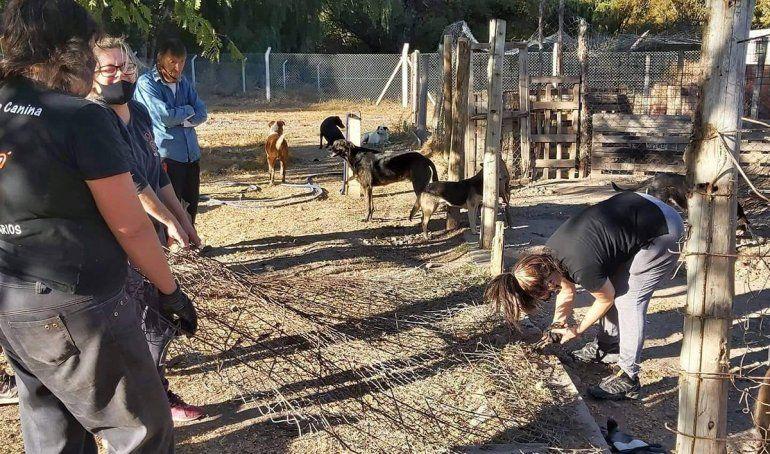 En la guardería de mascotas de la comuna ha ido decreciendo el número de perros alojados. La labor de las voluntarias proteccionistas ha sido clave.