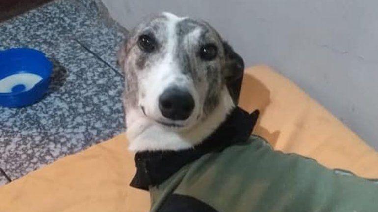 Caso Estelita: arranca el primer juicio por crueldad animal en Cipolletti