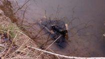 bronca: encontraron la cabeza de un caballo tirada en un desagüe