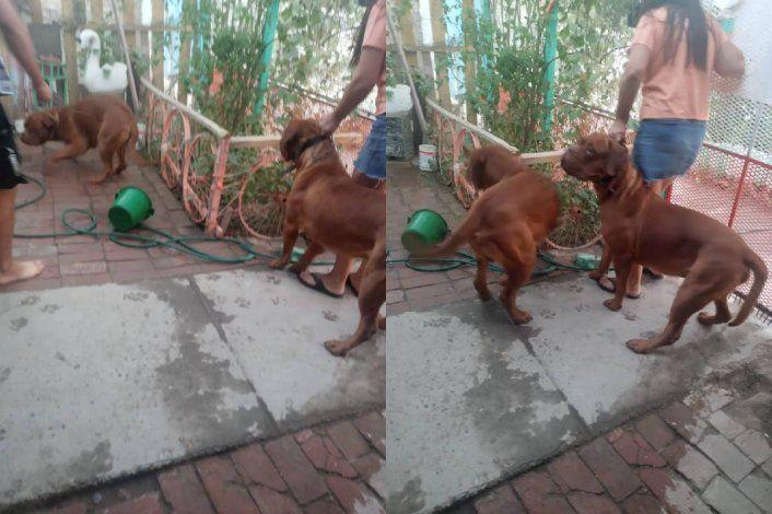 Visitaron a los dueños de los perros asesinos