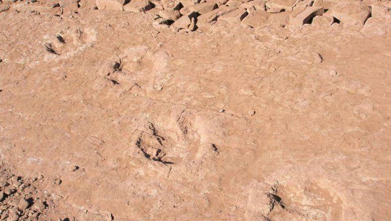 Realizan nuevo descubrimiento de huellas de dinosaurios