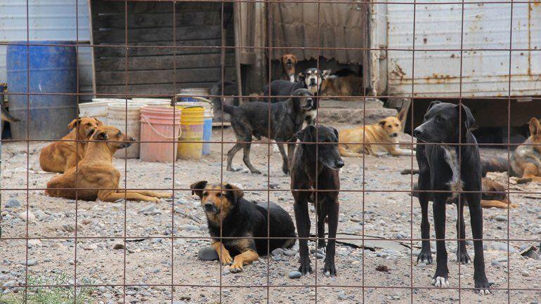Solucionarán el problema de la falta de agua en la perrera