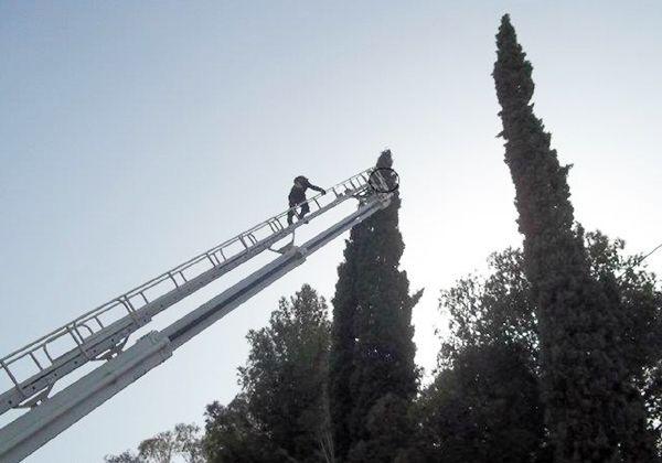 Bomberos de esta ciudad y Fernández Oro rescatan a un gato subido a un pino