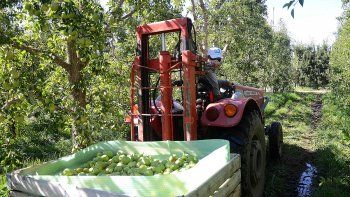 productores buscan garantizar el cobro de $25 por kilo de fruta