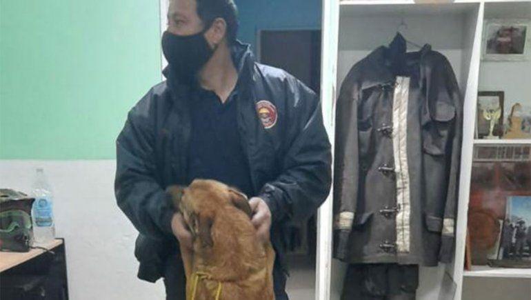 Apareció Roma, la perra cipoleña experta en rastrillajes