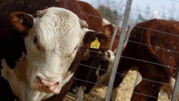 palmieri reclamo el permiso de exportacion de carne