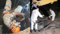 dina huapi: rescataron a un caballo que cayo a un pozo ciego