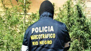 cocaina y marihuana, las drogas mas incautadas en el valle