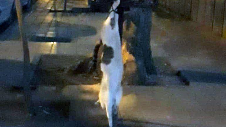 Aberrante matanza de gatos conmocionó a vecinos cipoleños