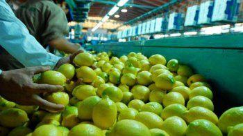 Los mayores productores de estos cítricos son tucumanos.