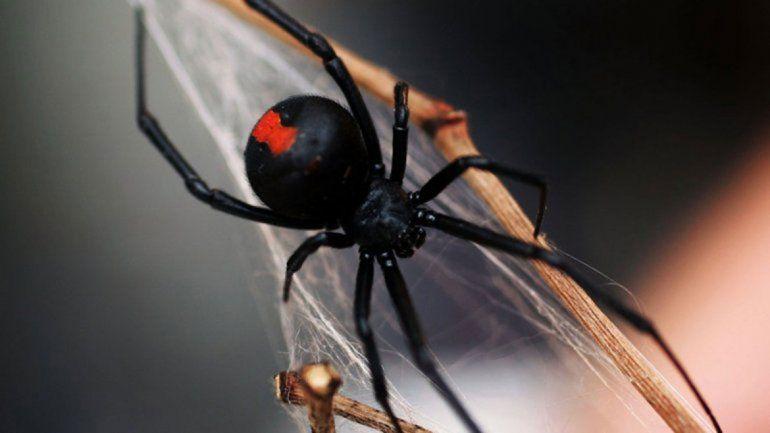 Con el calor, hay que cuidarse de arañas y serpientes