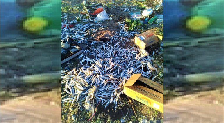 Tiraron cientos de pescados en un basurero clandestino de San Antonio Oeste