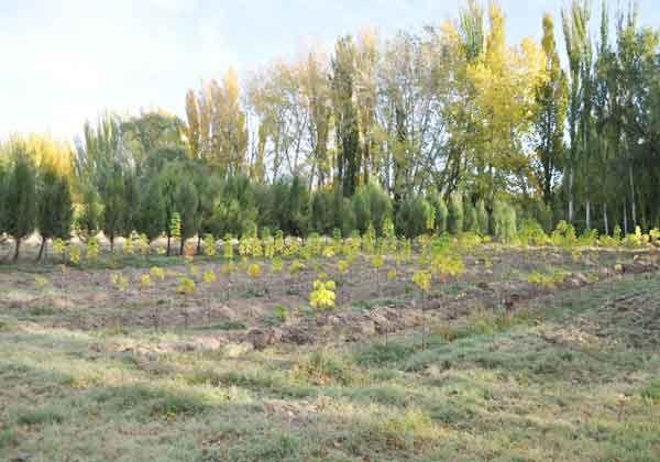 Unos 900 árboles, a disposición de los vecinos