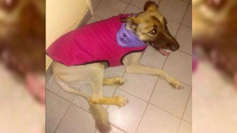 Una familia denunció que le envenenaron a su perra