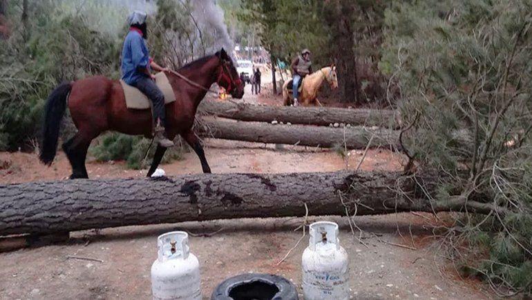 Rociaron el bosque con combustible para que no los desalojen