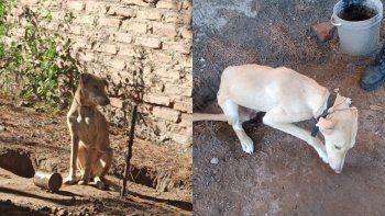 catriel: rescataron a un perro maltratado por sus duenos