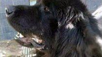 denuncian que un joven mato a un perro a patadas