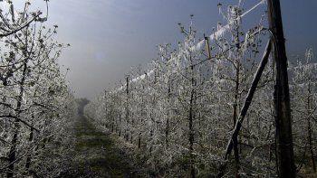 Las heladas hicieron perder la mayor parte de la producción en la región.