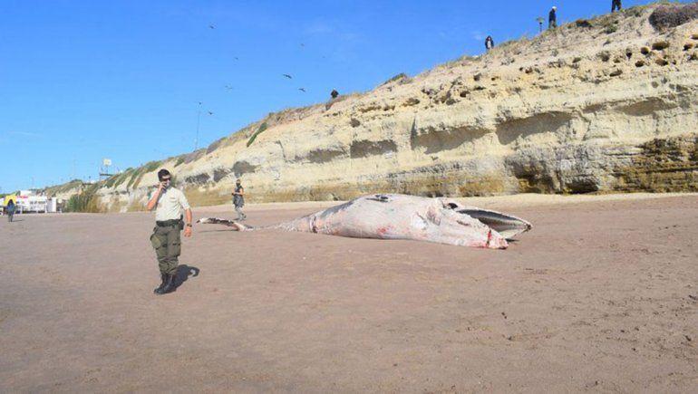 Una ballena muerta apareció en la playa de Las Grutas