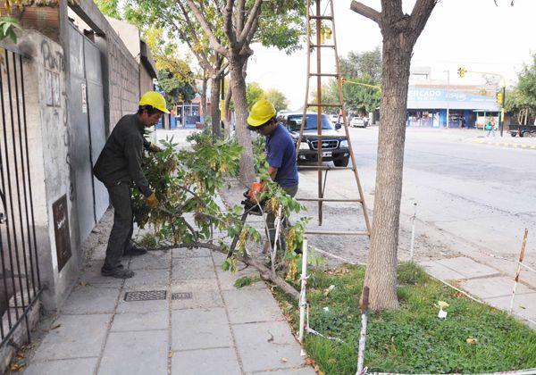 Podan árboles en el barrio La Paz para brindar más seguridad