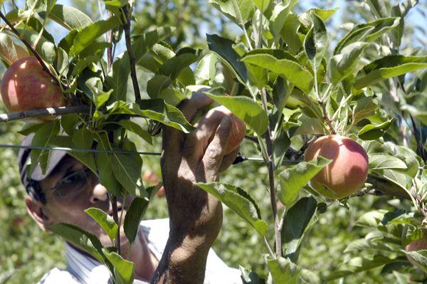 ¿Que opina sobre la crisis frutícola?