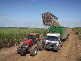 Una imagen sin fecha muestra los cultivos que se están recolectando para producir biocombustibles por el fabricante brasileño de azúcar y etanol Raizen, una empresa conjunta entre Cosan SA y Shell, en