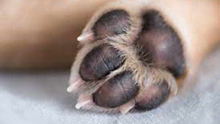 Roca: allanaron la casa de la mujer que dejó morir de hambre a su perro