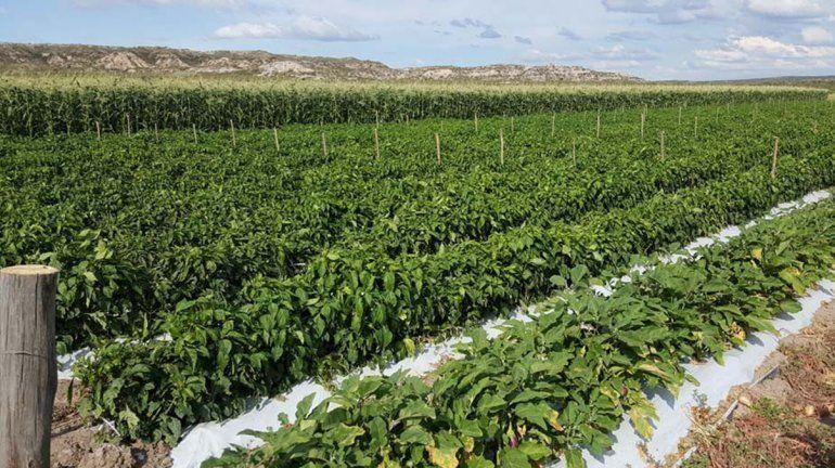 Río Negro lanza nuevas líneas de financiamiento para el sector productivo