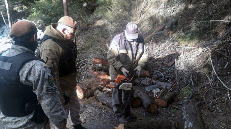 Secuestran motosierras y especies nativas taladas por furtivos