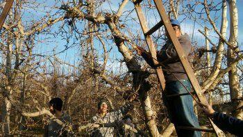 aumento del 40,9% para los salarios de los trabajadores que podan los frutales