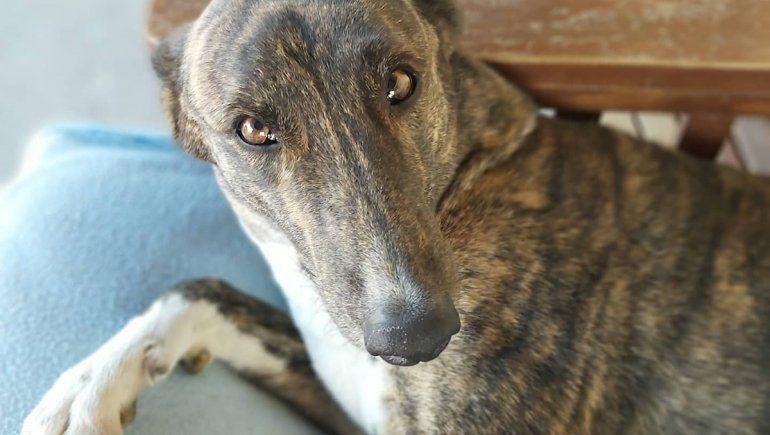 Isla Jordán: una nueva adopción en la perrera emocionó a los cipoleños