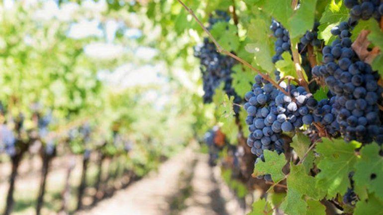 Lanzan en Río Negro un proyecto para sostener la actividad vitivinícola