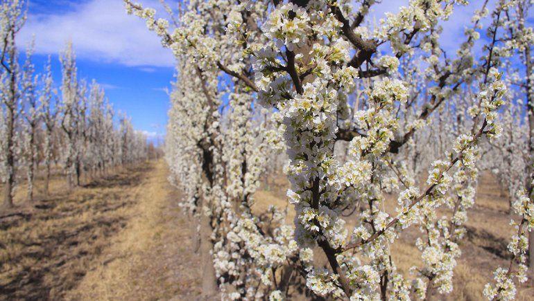 Para el Estado la fruticultura está en el olvido