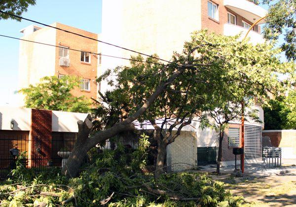 Peligro, árbol caído contra los cables de luz
