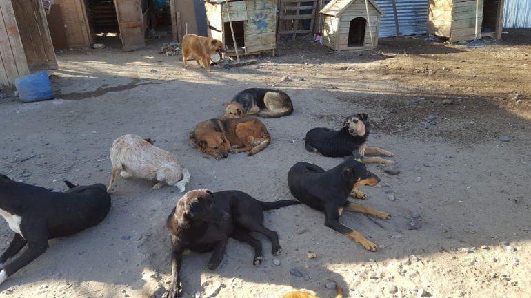 Demandarán a una proteccionista del refugio canino por calumnias y amenazas