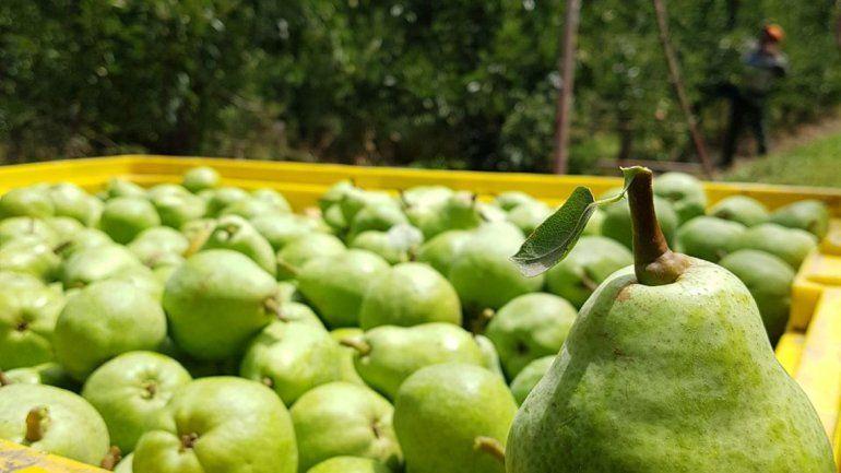 Entregaron 800 kilos de peras en Centros de Promoción Comunitaria