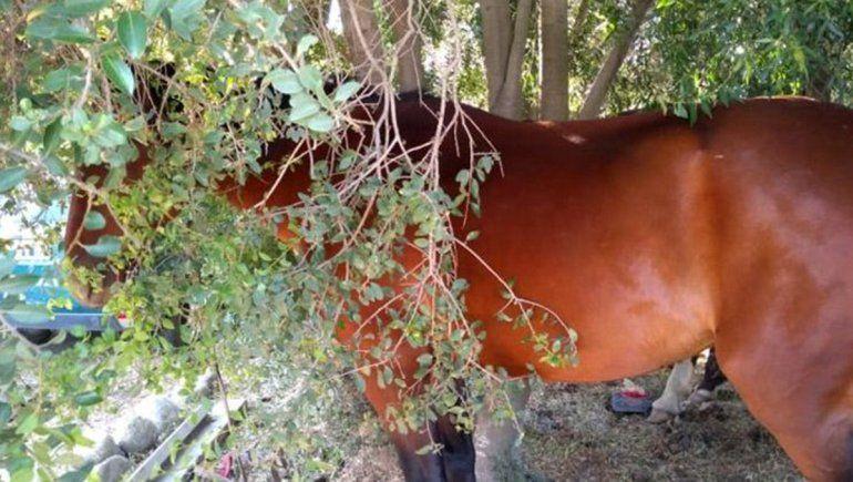 Dos jóvenes a caballo robaron en una despensa