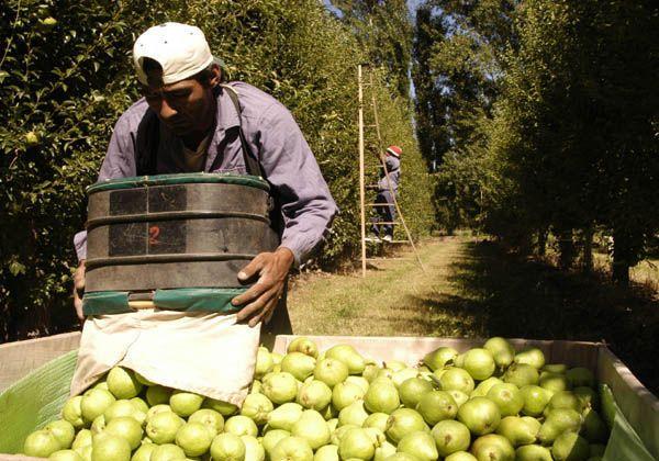 Ayuda económica para trabajadores temporarios de la fruta desocupados