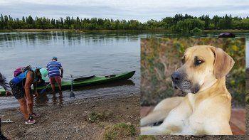 vecinos unen fuerzas para rescatar a un perro atrapado en un islote