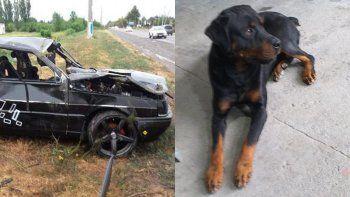 su pareja murio en un accidente y busca recuperar a su perro