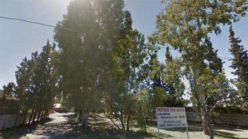 ordenaron al municipio de oro a sacar eucaliptos de una plaza