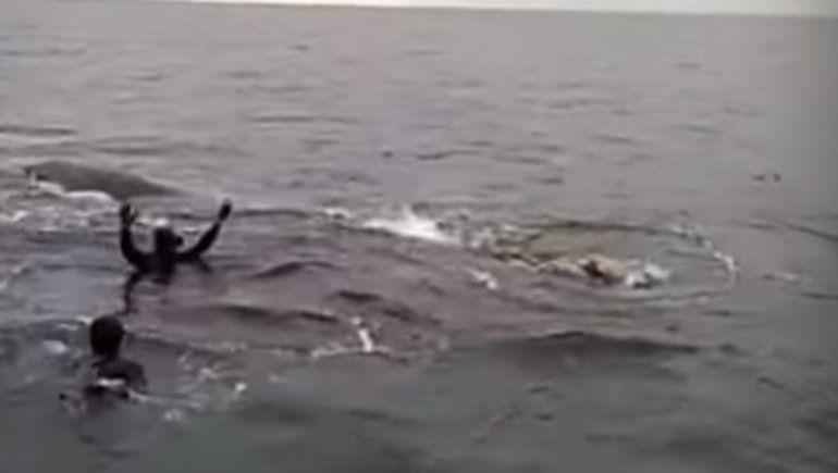 Grave denuncia contra buzos por intentar montar una ballena franca