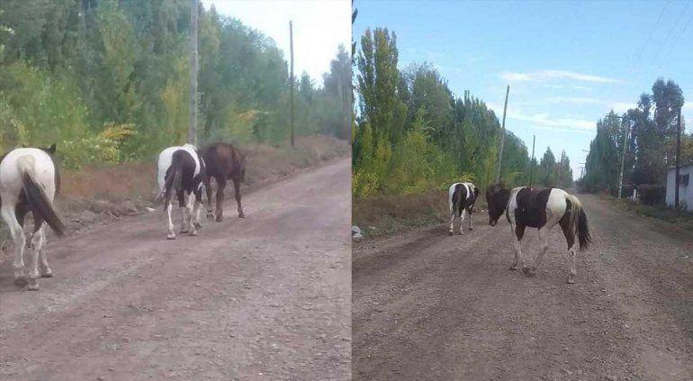 Alarma en Ferri por caballos, ovejas y vacas sueltas