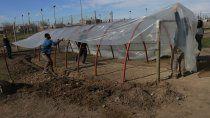familias cipolenas se suman a la produccion de alimentos saludables